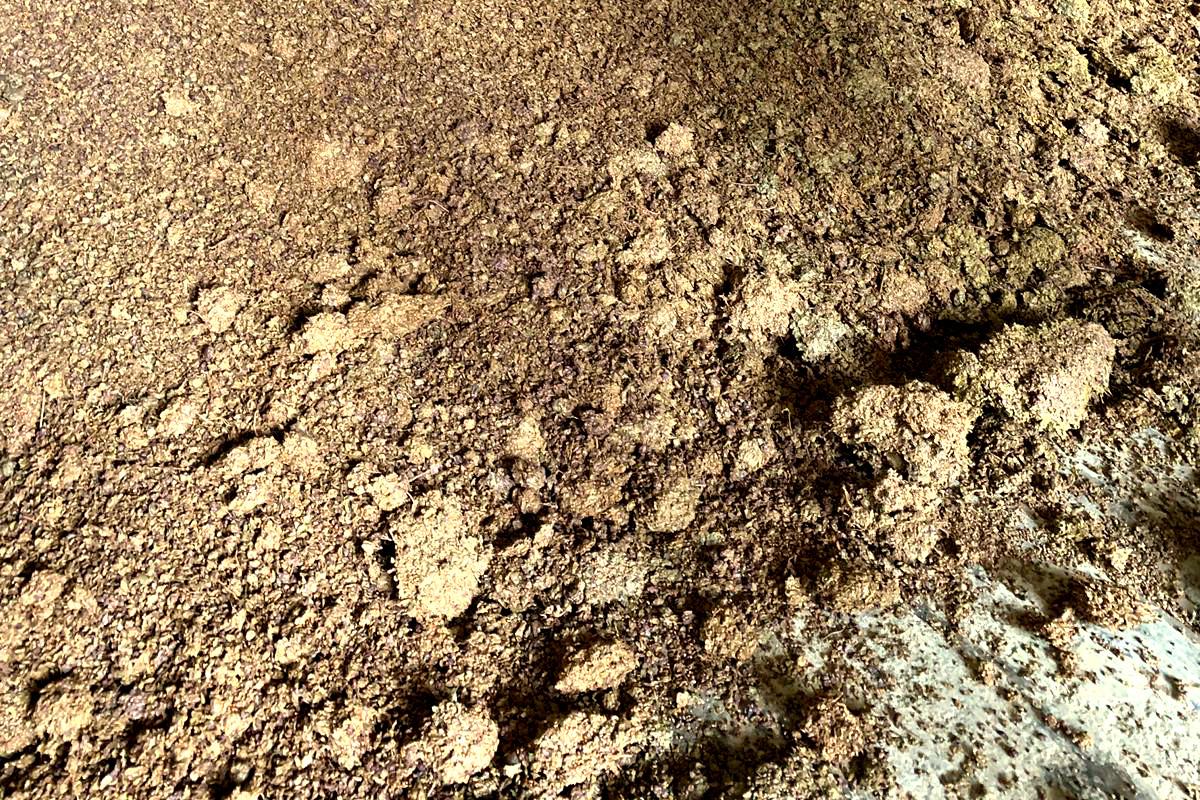 La vinaccia e la feccia nella produzione della grappa